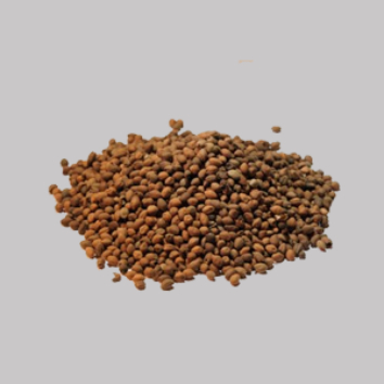 Ololiuhqui (Rivea corymbosa)